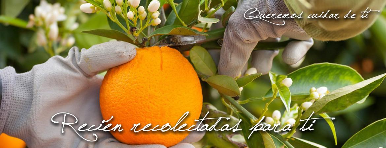 El Naranjero
